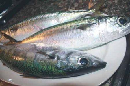 Ricetta Sgombri Alla Mugnaia – Pesce