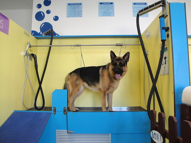 Come funziona il lavaggio cane self service
