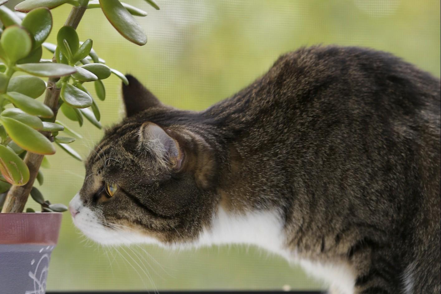 Come allontanare i gatti dalle piante donne magazine for Piante velenose per i gatti