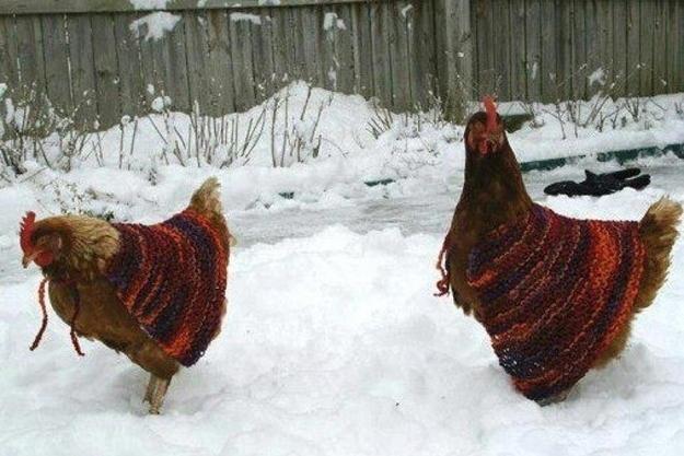 Ricetta Cock Eggnog – Bevande