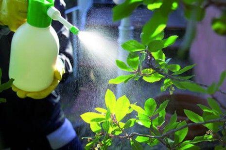 Come realizzare insetticida naturale