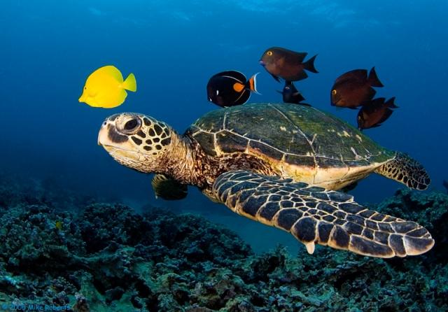 Isole Eolie aumentano tartarughe e cetacei