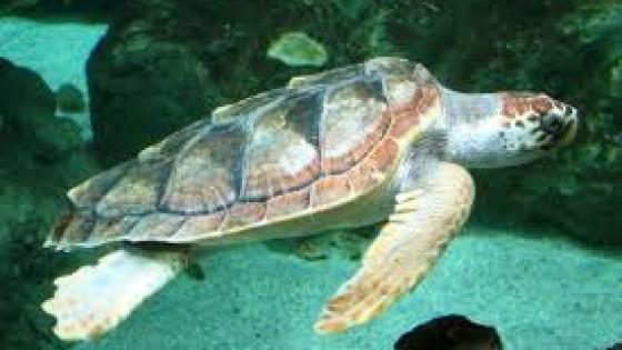 Sos tartarughe
