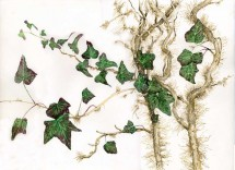 Bagno con edera e betulla per cellulite