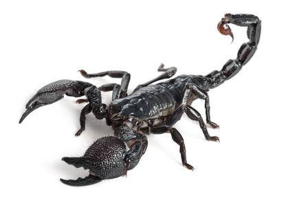 Le zone erogene dell'uomo scorpione