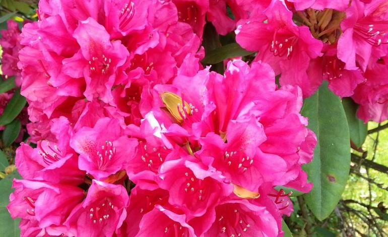 Piante che fioriscono in inverno donne magazine for Piante che fioriscono in inverno