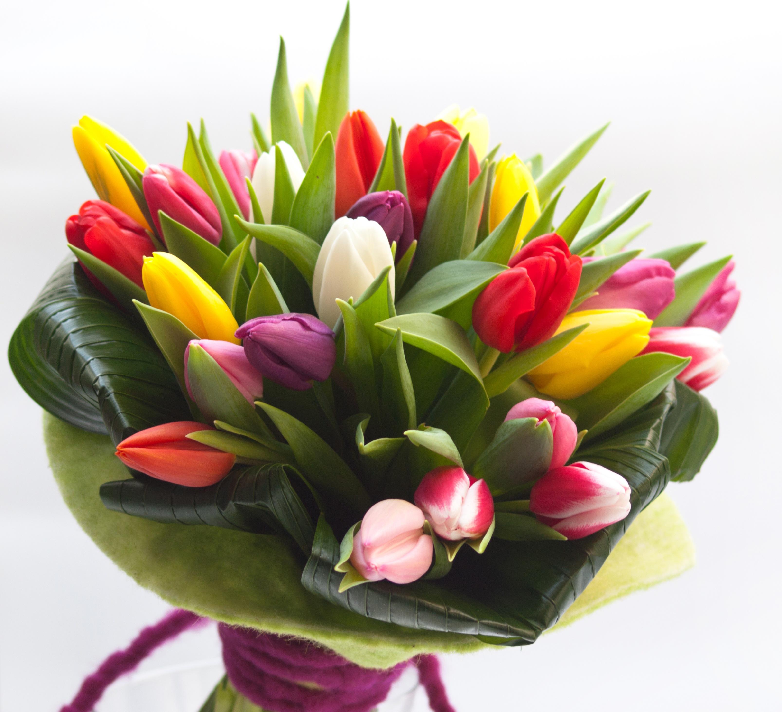 Come piantare bulbi di tulipano in casa
