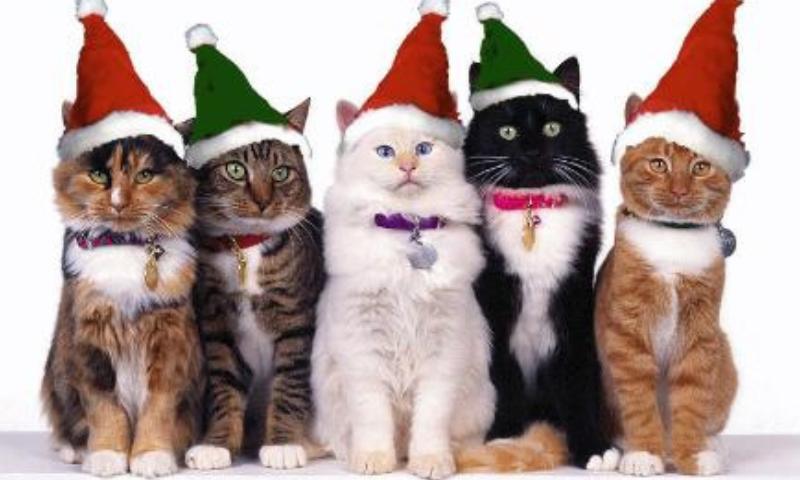 10 libri da regalare per chi ama i gatti
