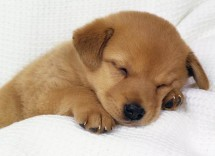 10 motivi per scegliere un cane meticcio