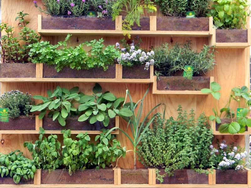 Come creare un piccolo orto sul balcone
