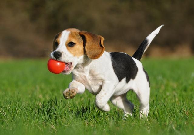 Come educare il cucciolo di cane a vivere in casa