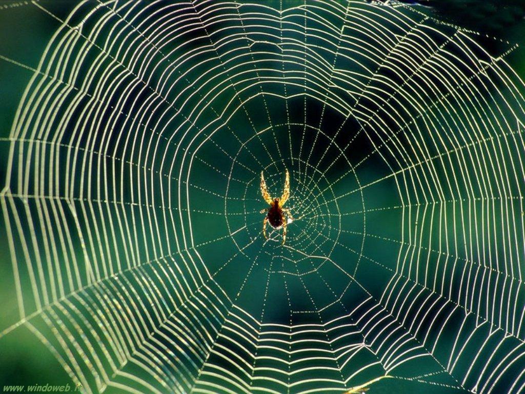 Come eliminare ragni in casa