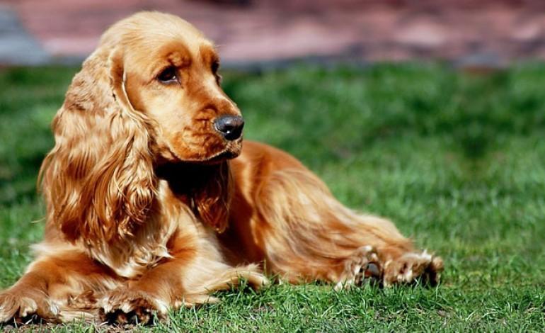 cani da appartamento tranquilli - 28 images - i migliori cani da appartamento tutto ze, cani da ...