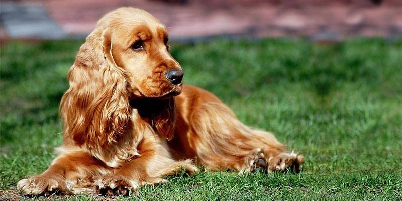 Cani taglia media più tranquilli