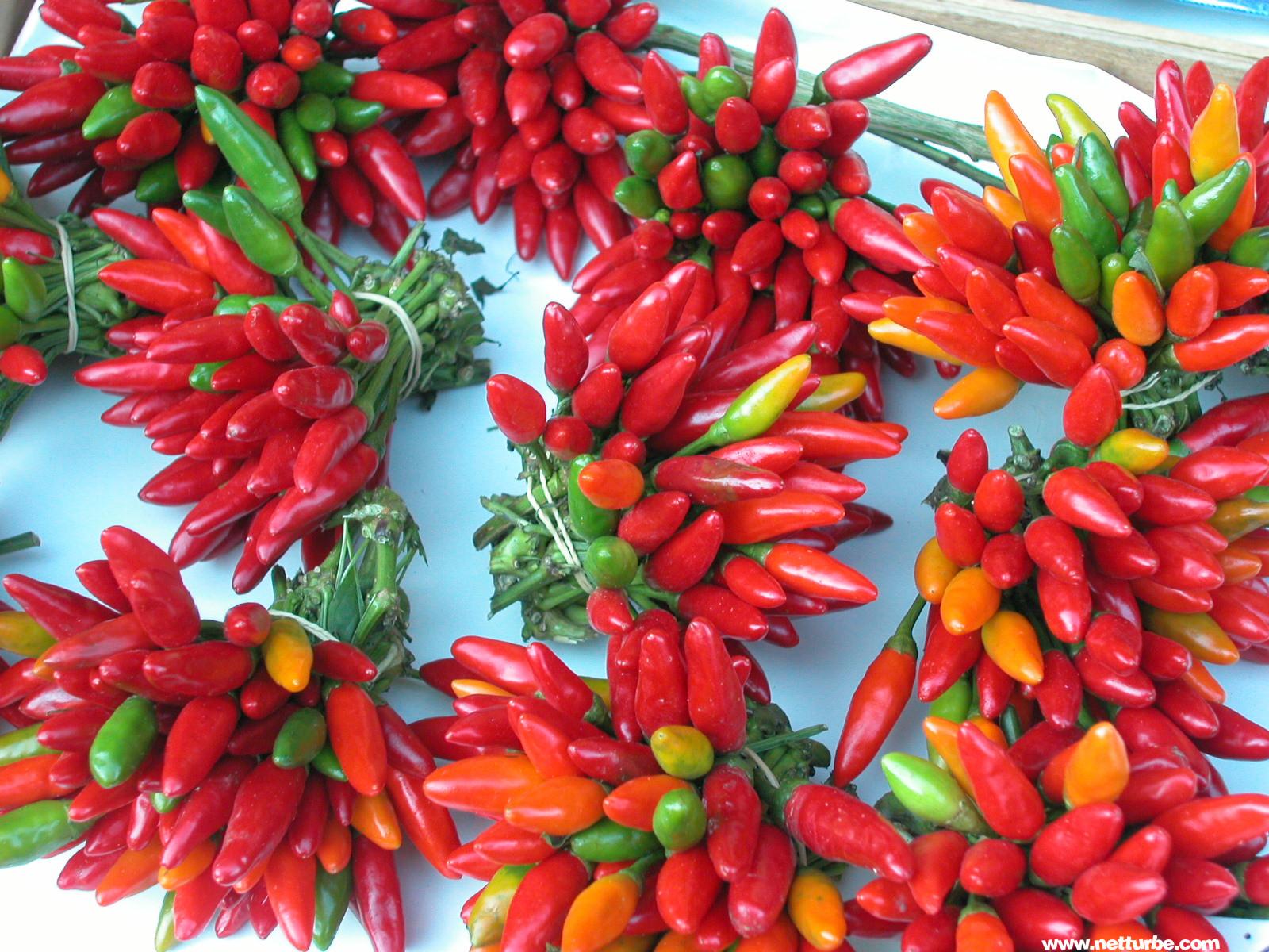 Come coltivare in casa peperoncino Habanero
