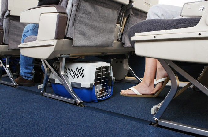 Costo trasporto cane in aereo Meridiana