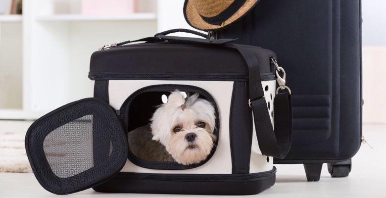 Costo trasporto cane in aereo Alitalia