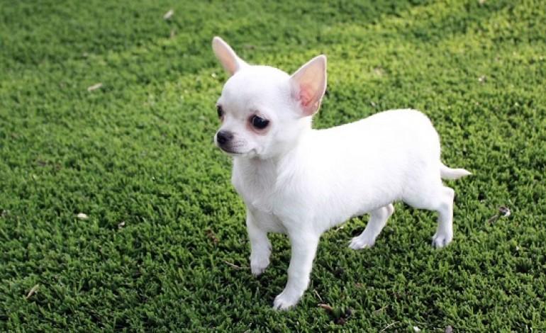 Cani da appartamento piccola taglia miglior razza - Donne Magazine