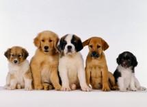 Cani piccola taglia più tranquilli