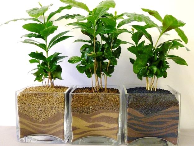 Come curare le piante da appartamento