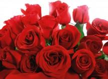 Che cosa significa regalare 12 rose?