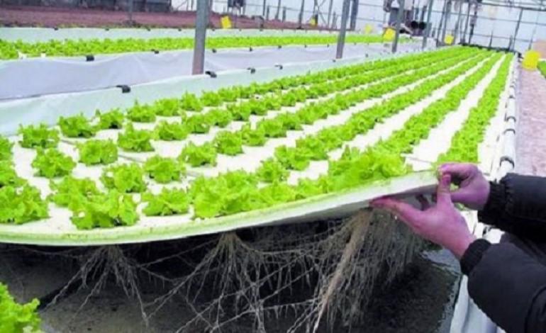 Coltivazione idroponica cole coltivare la lattuga senza - Coltivazione idroponica in casa ...
