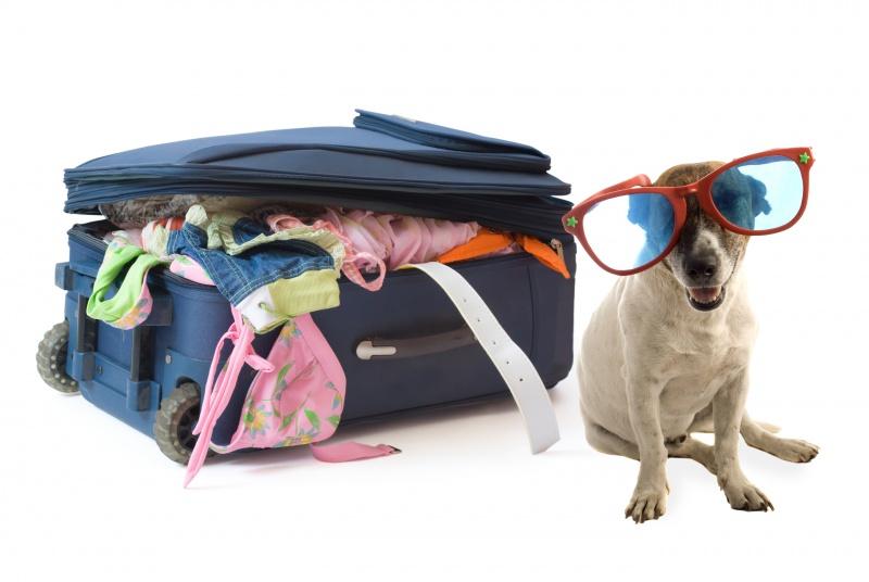 Costo trasporto cane in aereo Airfrance