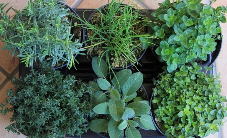 Come coltivare le piante aromatiche in balcone donne magazine - Coltivare piante aromatiche in casa ...