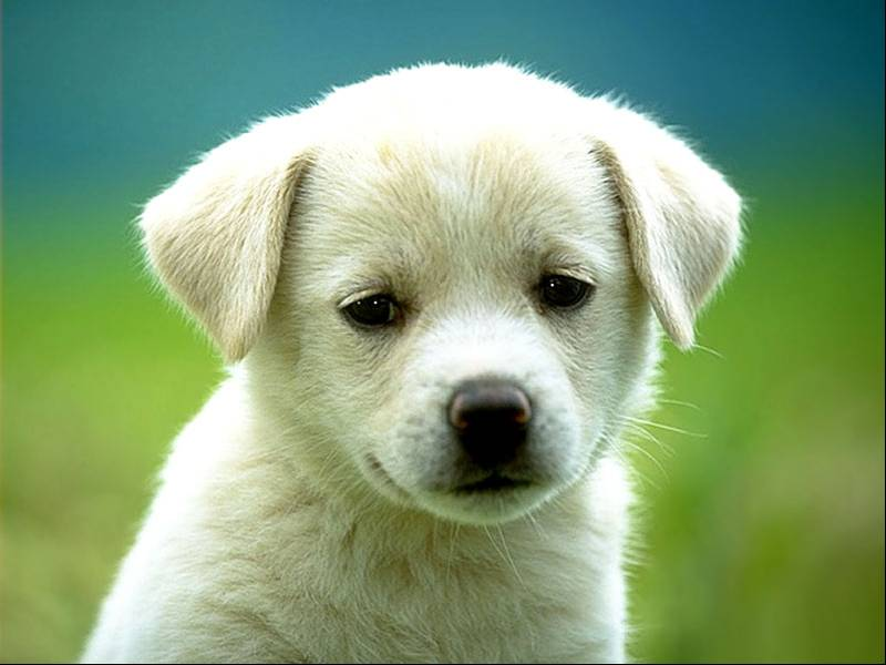 Costo vaccino contro leishmaniosi cani