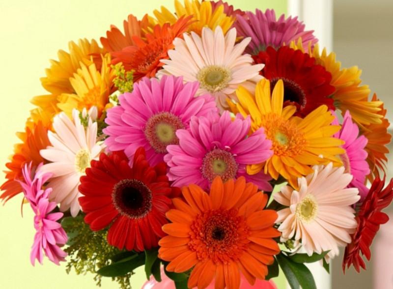 Quali fiori regalare alla donna cancro