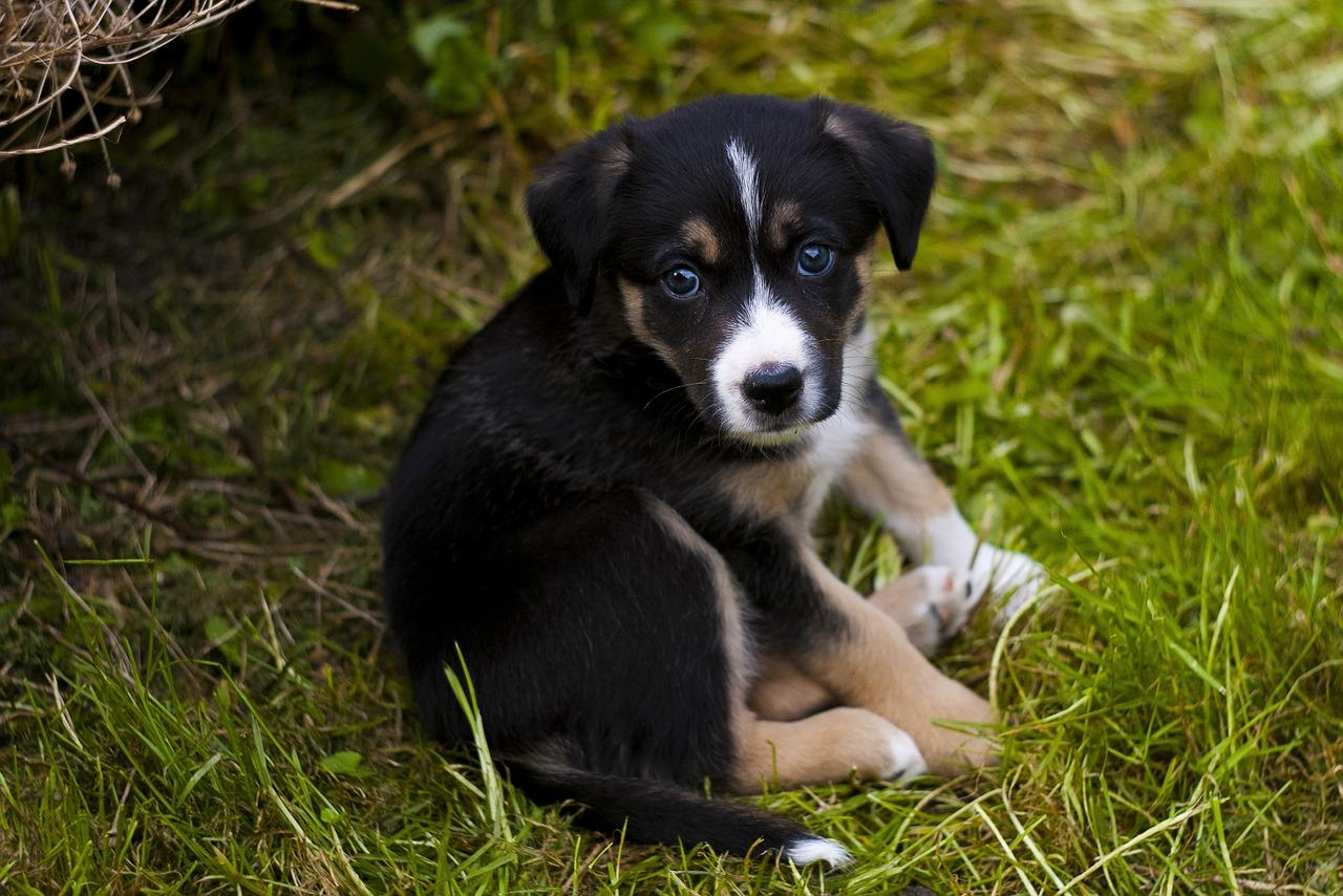Come proteggere cani dalle pulci