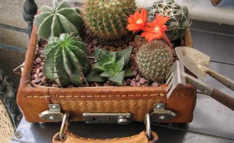 Idee composizione piante grasse - Donne Magazine