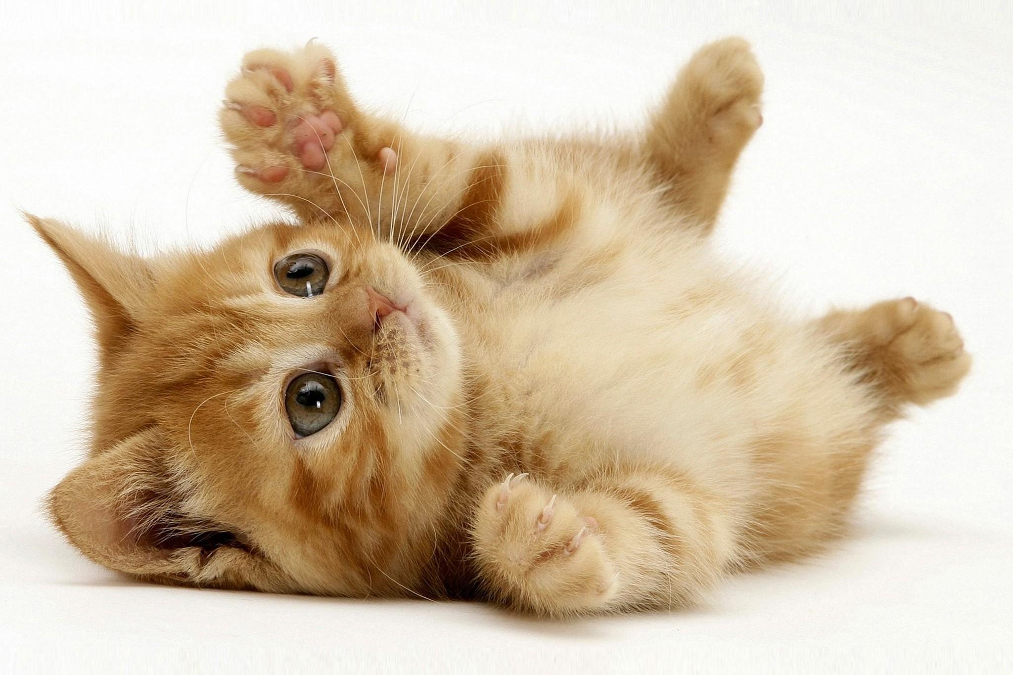 Applicazioni Android più utili per chi ha un gatto