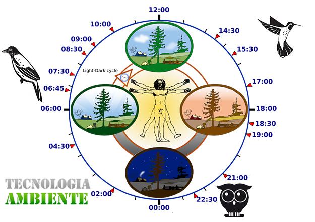 Caratteristiche cronotipo gufo