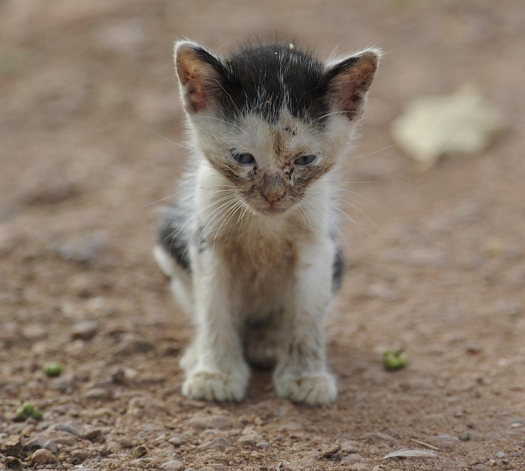 Cosa fare se trovi gatto abbandonato