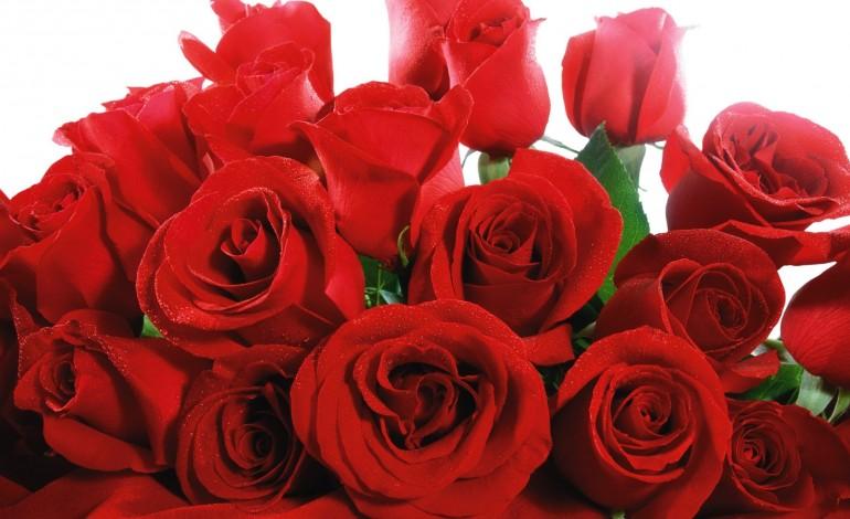 Quante rose regalare alla fidanzata
