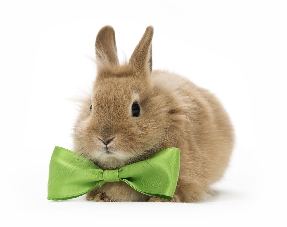 5 cose da sapere prima di prendere un coniglio
