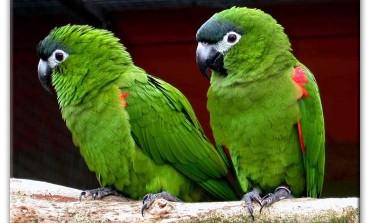 5 cose da sapere prima di prendere un pappagallo