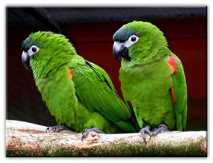 5 cose da sapere prima di prendere un pappagallo donne magazine - Cosa sapere prima di comprare casa ...