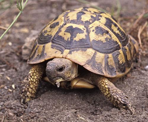 Alimentazione tartaruga di terra