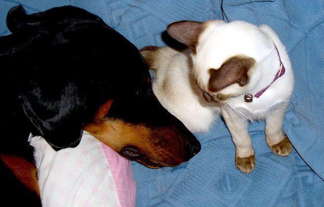 Migliori ansiolitici per cani
