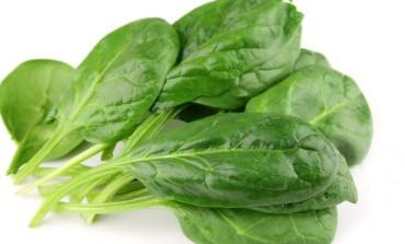 Come coltivare gli spinaci in casa