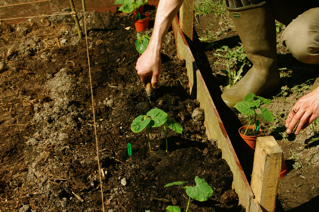 Come fare concimazione di copertura orto primavera