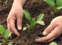 Ortaggi da piantare a giugno