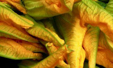 5 modi diversi di cucinare i fiori di zucca