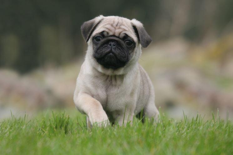 Cani piccola taglia pelo corto da adottare
