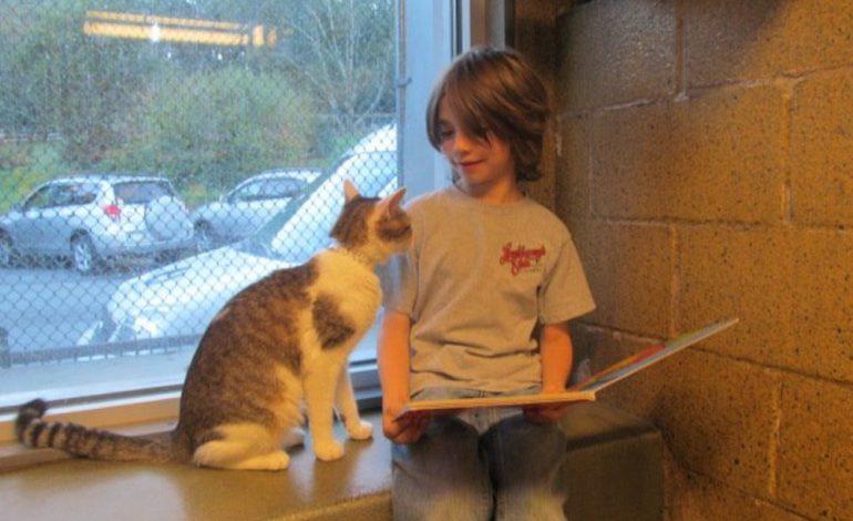 Bambini che imparano a leggere insieme a dei gattini abbandonati