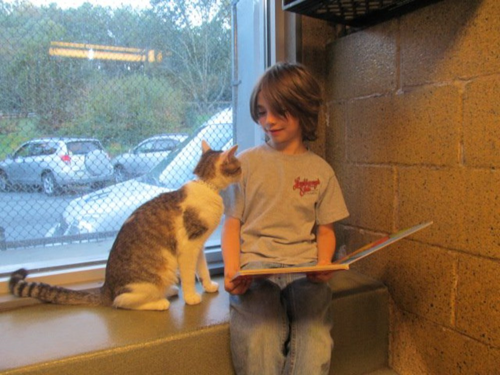 books buddies bambini leggono ai gatti
