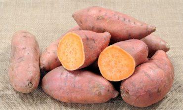 Quando si piantano le patate americane: consigli