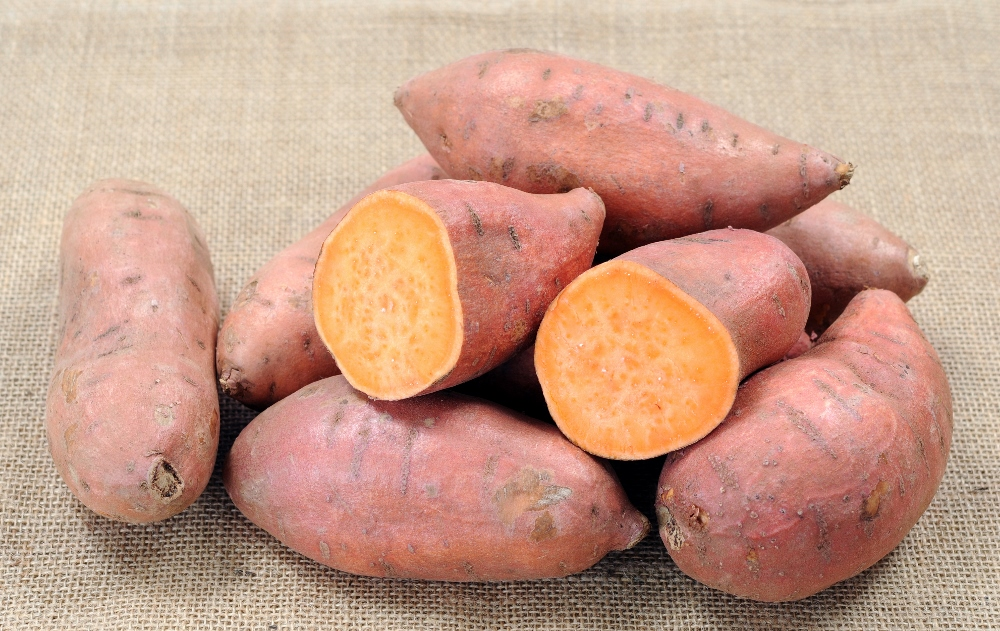 Quando si piantano le patate americane consigli for Patate dolci americane